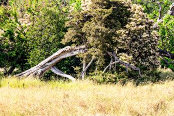 Wiese mit altem Baumstumpf